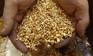 Треска за злато около Перник