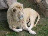 Picture: Истината: Съществува ли наистина Черния Лъв?