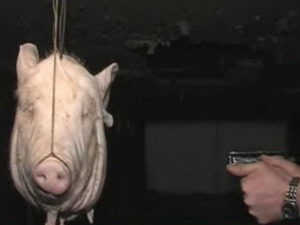 Свинска глава