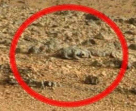 Гущер на Марс