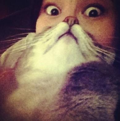 Котко-брадите