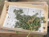 Picture: Дяволски тамян – най-търсената дрога в столицата