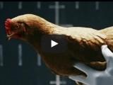 Picture: Какво е общото между кокошките и новата S-клaса на