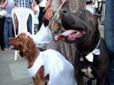 Picture: В Шри Ланка разследват... сватба на кучета