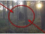Picture: Страховито! Загадъчно и зловещо създание треби домашните животни