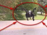 Picture: Шокиращо! Дяволът се появи на Земята! (ВИДЕО)
