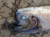 Picture: Тази МИСТЕРИЯ от океана разтърси света! (ВИДЕО)