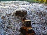 Picture: Тцтц! Изхвърлиха 7,5 милиона долара на боклука!