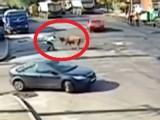 Катаджия срещу разярен бик