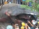 Picture: Откриха мистериозен гигантски звяр в джунглата! (ВИДЕО)