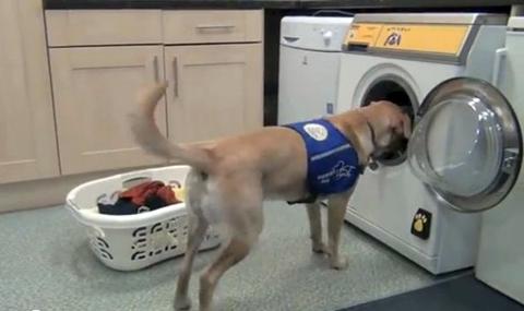 кучета пускат прането