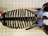 Picture: Скелет на гигантски динозавър бе продаден за 400 хил. паунда