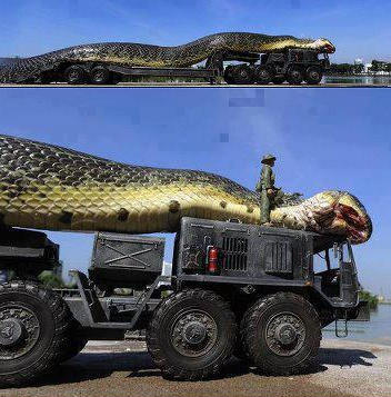 Грамадна змия