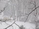 Picture: Снежни бури връхлетяха 22 американски щата