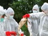 Picture: Южна Корея въвежда карантина, заради епидемия от птичи грип