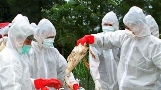 епидемия от птичи грип