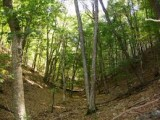 царските гори