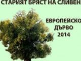 Европейско дърво на годината