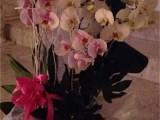Picture: Лили Иванова си показа орхидеите във Фейсбук