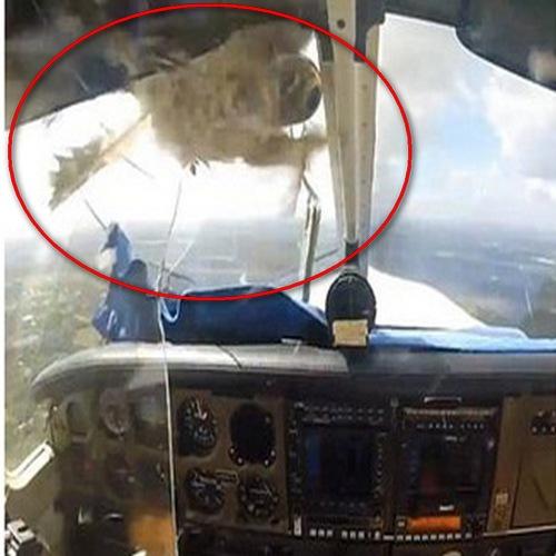 Птица разби стъклото на малък самолет
