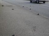 Picture: Птици падат от небето след мистериозен взрив?!