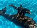 Picture: Американската армия мобилизира бойни делфини в Черно море