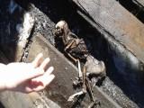 останките на неизвестно животно