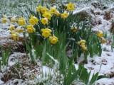 Picture: Времето: Сняг през Страстната седмица, 20 градуса за Великден