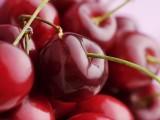 Picture: Жандармерия пази черешовите градини в Кюстендил