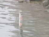 Picture: Опасност: Нивото на Дунав ще се вдигне максимално на 24 май