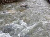 Река заля главния път за Плевен