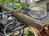 Picture: Страшна буря взе жертви в Германия
