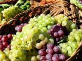 Picture: Слаба реколта от грозде