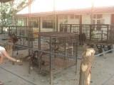 Отрова е причинила смъртта на животните в Софийския зоопарк
