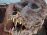 Picture: Върколаци в Македония? (Странна находка подлуди обществото)