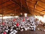 Въвеждат се мерки срещу птичия грип