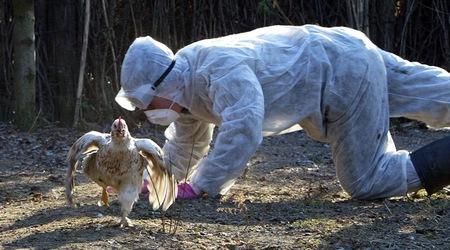 В Бургас е регистриран птичи грип