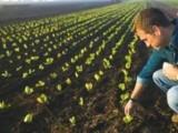 Picture: Близо 1 млрд. лева ще бъдат изплатени на земеделците през идващата седмица