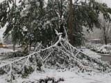 Десетки сигнали в София заради паднали дървета от обилния сняг
