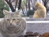 Picture: Преброяват бездомните котки, София е от градовете с най – много бездомни котки
