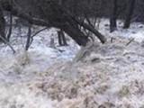 Синоптиците вещаят нов потоп