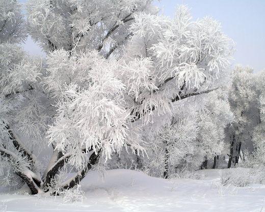 Люта февруарска зима – в Европа и в САЩ