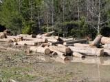 Износители на дървесина блокират Хаинбоаз и границата