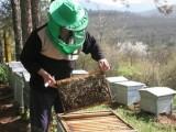 Picture: Протест на пчелари и медари