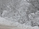 Над 200 000 българи бедстват