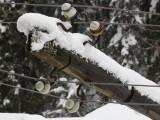 60 000 домакинства остават без ток