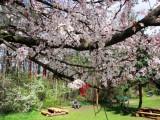Picture: През април ще се редуват слънце и дъжд, топло и студено