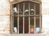 Европа: Полицаите в България малтретират малолетни, затворите са унизителни