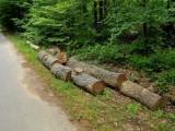 Изсечените дървета – с баркод