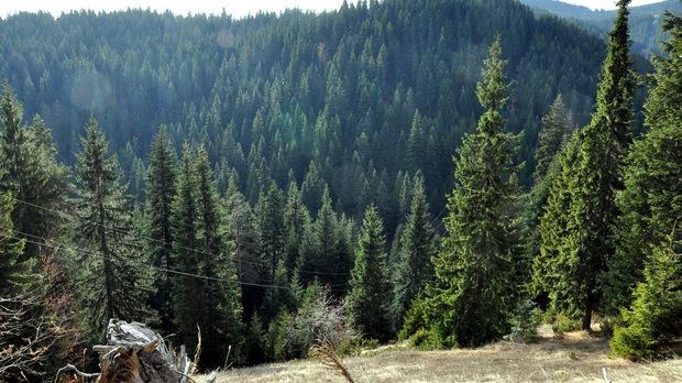 Нов протест на горския сектор – пред парламента